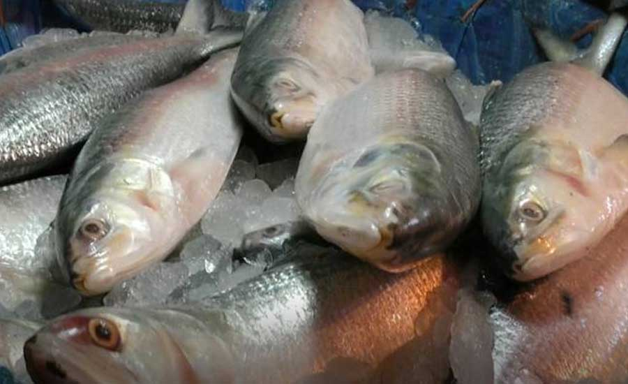 ilish machh (hilsa fish)